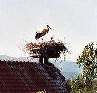 Cigogne et Légende dans CIGOGNE 200px-stork2