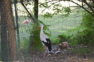 La vie de la cigogne dans CIGOGNE chateau_de_moidiere_-_cigogne