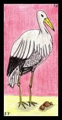 oracle de la cigogne dans CIGOGNE images-111