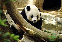 220px-Lightmatter_panda