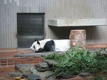 220px-Ling_Ling_at_Ueno_Zoo