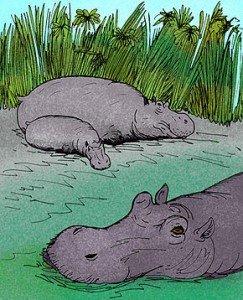 290px-Hippopotamus_gorgops_e