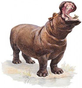 1001181-Hippopotame