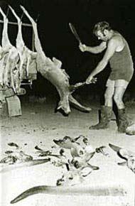 kangourou fourure