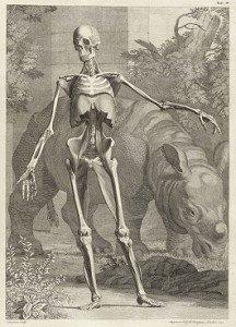 640px-Clara_Rhinoceros_from_Bernhard_Siegfried_Albinus_TAB_IV_-_1749