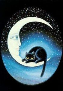 Chat_lune
