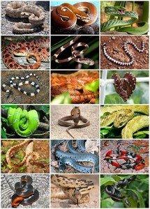 Snakes_Diversity