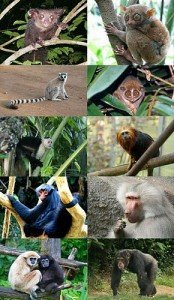Primates_-_some_families