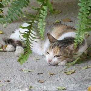 Cat sleeping under fern in Crete, Greece