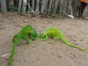 combat de caméléons