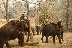 1024px-ElephantTrainingCamp