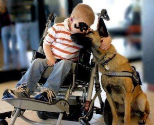 chien-handicap