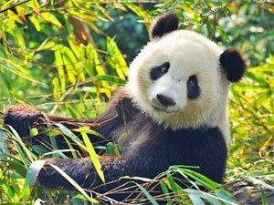 panda-totem-300