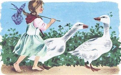 Les oies blanches d'Aubépine 2