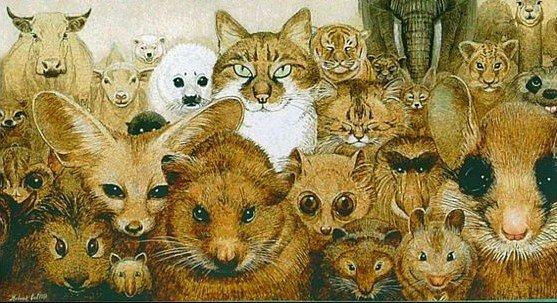 animaux réunis