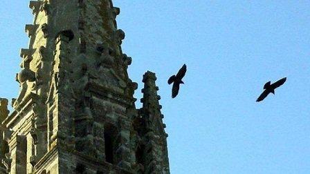 Corbeau des clochers