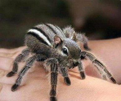 Araignée belle