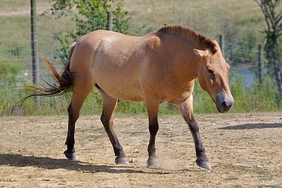 cheval lunaire