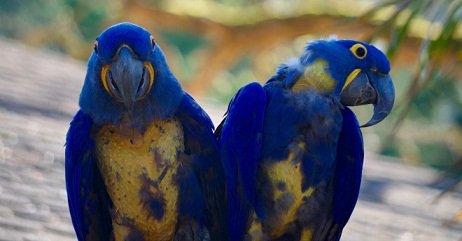 perroquet émotion