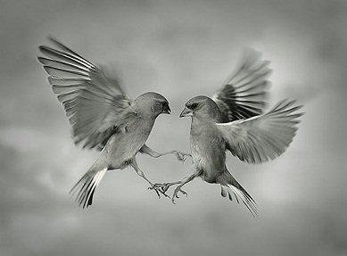 Colibri-