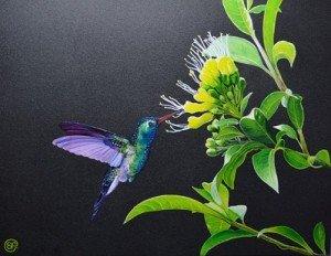 peintures-hachidori-le-colibri