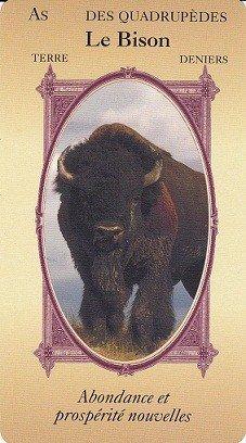 sagesse du bison