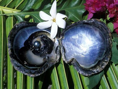huitre perle