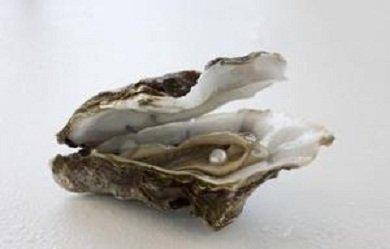 huitre perlière médical