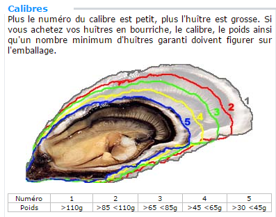 Calibrage huitre