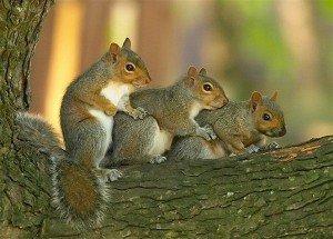 ecureuil symbole