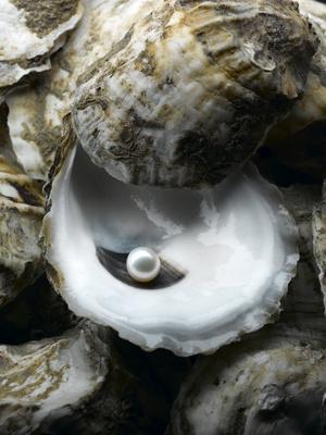 huitre-perle