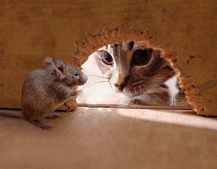 souris chat rat lapin grenier
