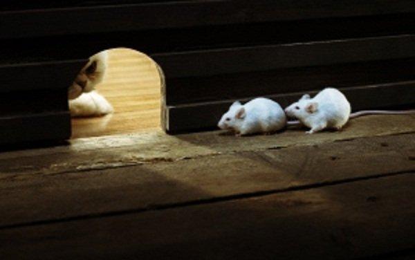 souris et chat