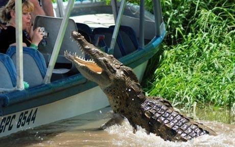 crocodile et l'homme