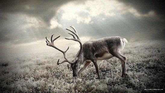 rêver de cerf