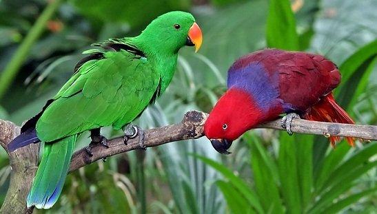perroquet ch