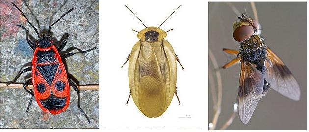 insectes chez francesca